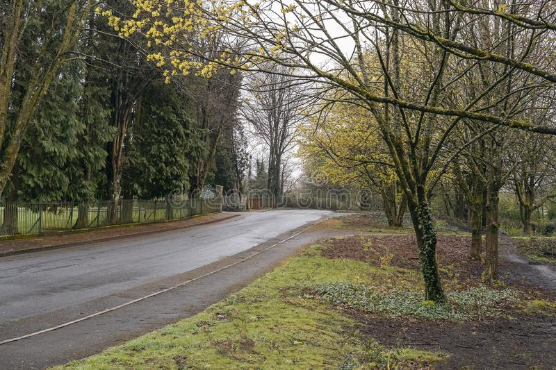 Park area on damp early Spring morning with trees starting to show signs of colour returning after winter. Rural lane with no cars surrounded on each side with royalty free stock images