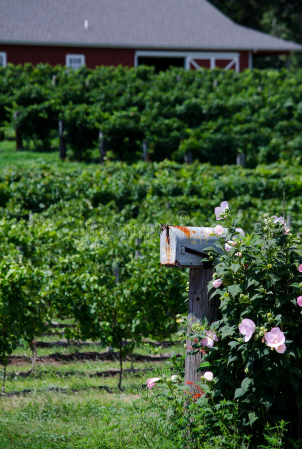 Download Rural mailbox and farm stock photo. Image of flowers - 34262812