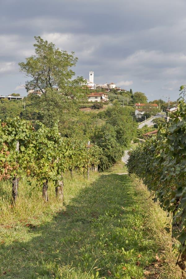 Rural mediterranean landscape with vineyards and Smartno village, Slovenia. Rural mediterranean landscape with Smartno medieval village and vineyards. Brda royalty free stock photography