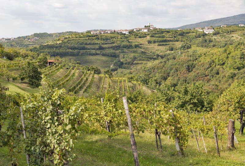 Rural mediterranean landscape with vineyards and Smartno village, Slovenia. Rural mediterranean landscape with Smartno medieval village and vineyards. Brda royalty free stock images