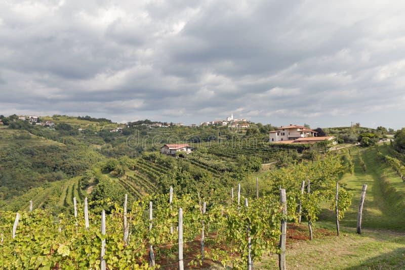 Rural mediterranean landscape with vineyards and Smartno village, Slovenia. Rural mediterranean landscape with Smartno medieval village and vineyards. Brda stock photo