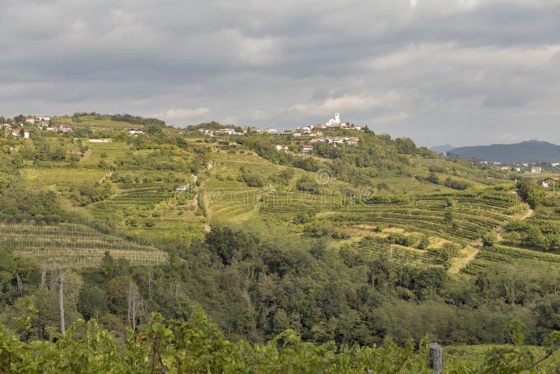 Rural mediterranean landscape with vineyards and Smartno village, Slovenia. Rural mediterranean landscape with Smartno medieval village and vineyards. Brda royalty free stock image