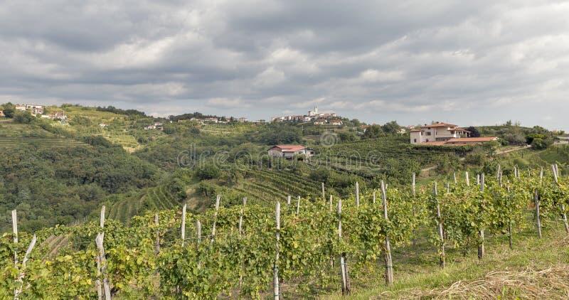 Rural mediterranean landscape with vineyards and Smartno village, Slovenia. Rural mediterranean landscape with Smartno medieval village and vineyards. Brda stock photos