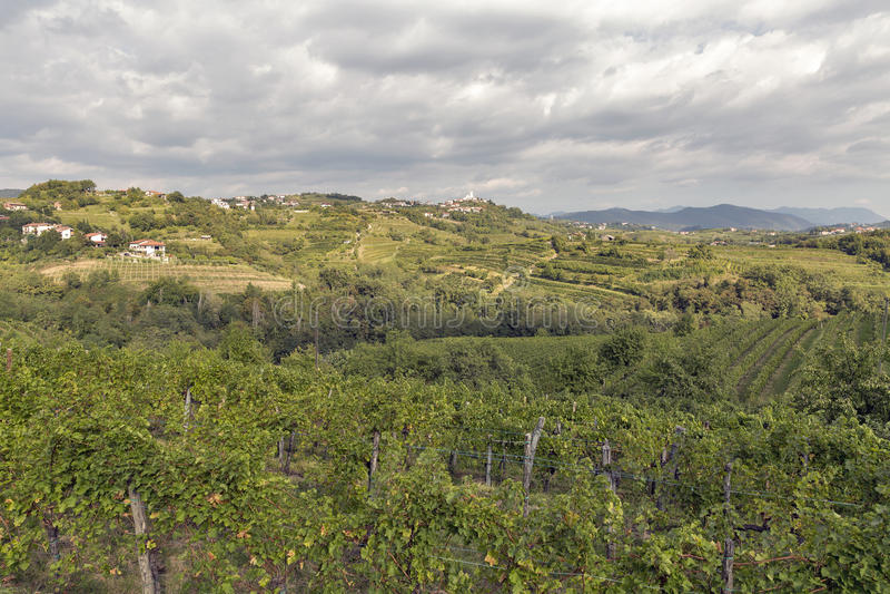 Rural mediterranean landscape with vineyards and Smartno village, Slovenia. Rural mediterranean landscape with Smartno medieval village and vineyards. Brda royalty free stock photo