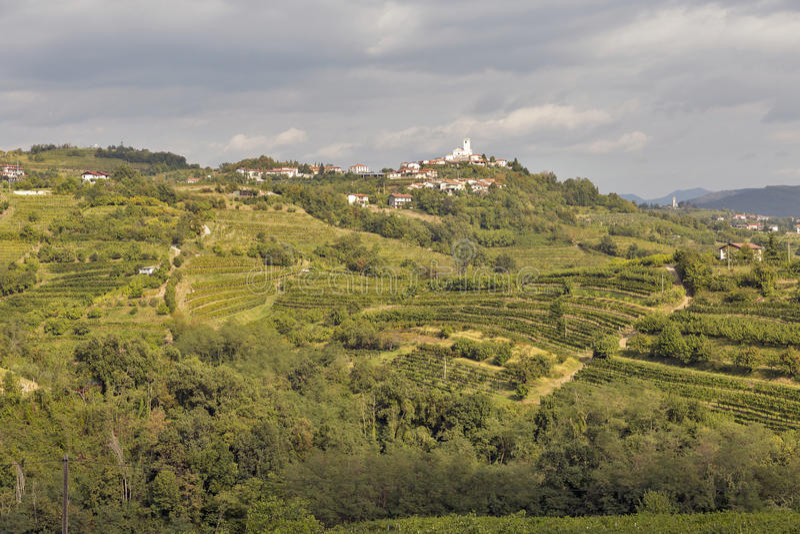 Rural mediterranean landscape with vineyards and Smartno village, Slovenia. Rural mediterranean landscape with Smartno medieval village and vineyards. Brda royalty free stock photos