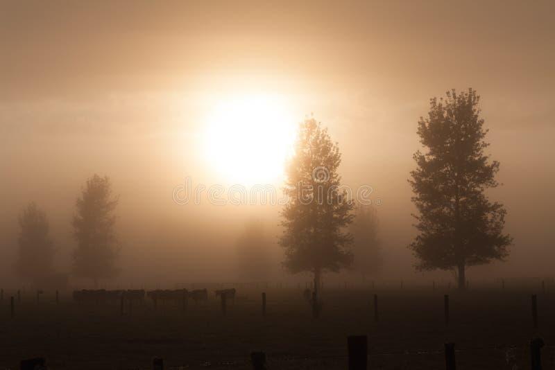 Rural morning fog stock photos