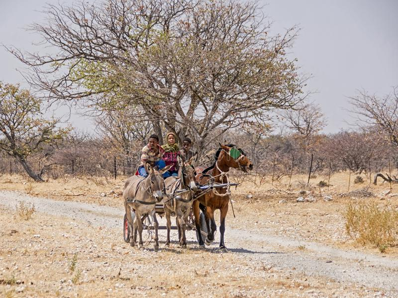 Working Cart. Rural Namibia, September 2017 - A horse and donkey drawn working cart royalty free stock photo