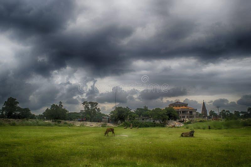 Rural Nature. Beauty of Nature, Narayangonj, Bangladesh stock images