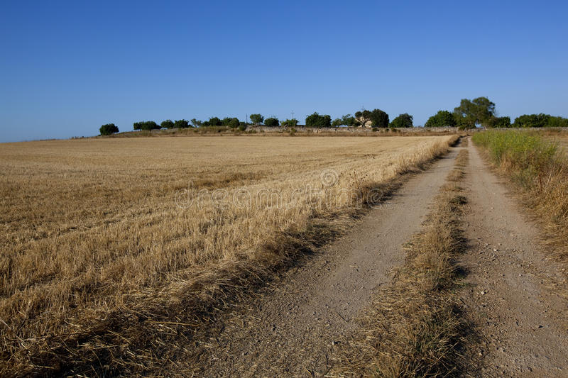 Download Rural Non-urban Road Throw The Field Stock Photo - Image of road, plain: 15849002
