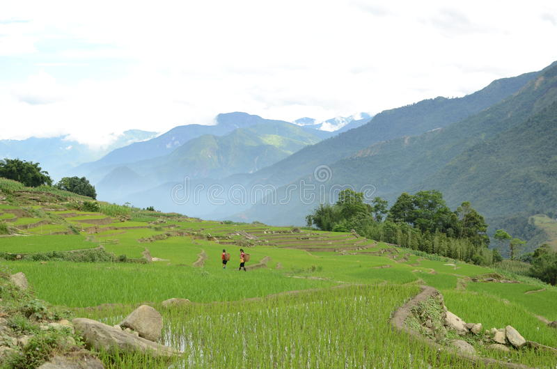 Rural North Vietnam. Green mountains near Sapa, Vietnam stock images