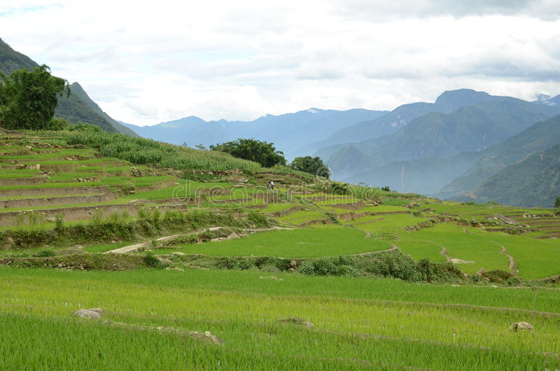 Rural North Vietnam. Green mountains near Sapa, Vietnam royalty free stock photos