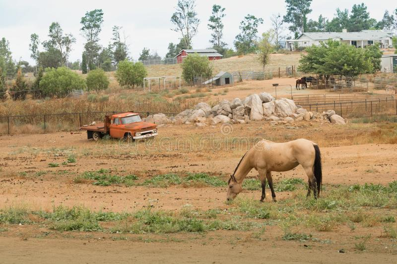 Rural old time vintage field landscape of an old orange flatbed truck with a bay horse in foreground, western farm lifestyle royalty free stock photo