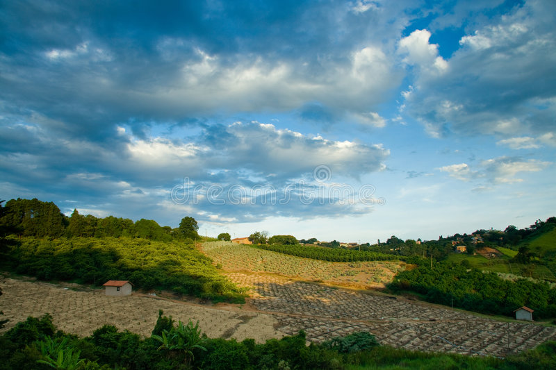 Fields in countryside royalty free stock photo