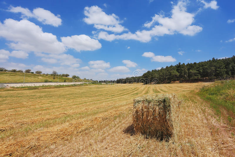 Rural pastoral. A stack of slanted wheat in a kibbutz field. Spring in Israel royalty free stock image