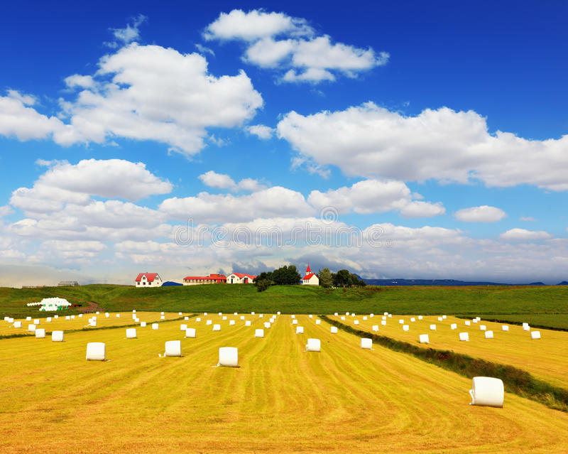 Rural pastoral after harvesting. Big field from the remains of a yellow grass and haystacks. The farm and different economic constructions is in the distance royalty free stock photo