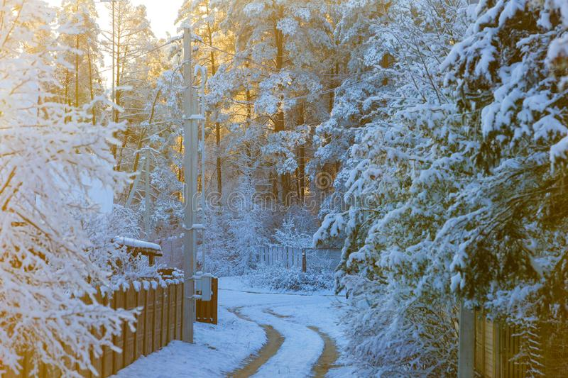Rural path leading to snowy forest. Sunrays stock photos