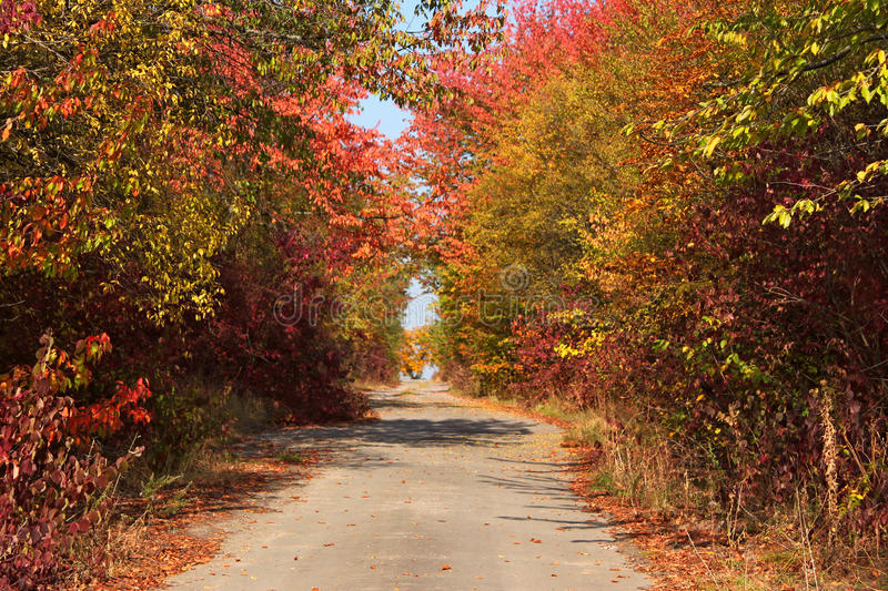 Rural paved road among autumn trees stock images