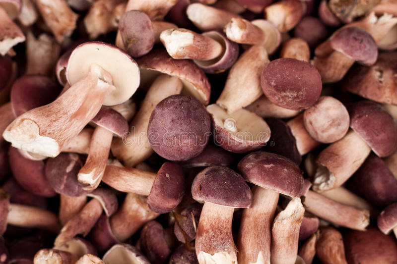 Rural people find the mushrooms cook. royalty free stock photos