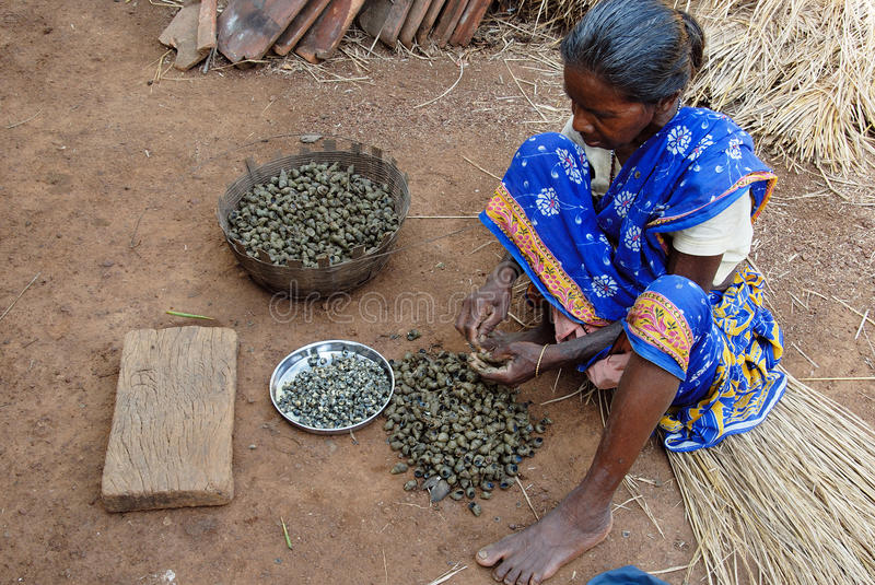 Rural poverty in India. June 02,2011 Rampurhut,Birbhum,West Bengal,India,Asia- A village woman extracting meat from the snail for food preparation stock image