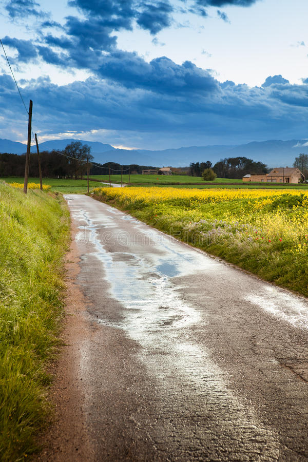 Download Rural road stock photo. Image of dusk, scenic, weather - 24743112