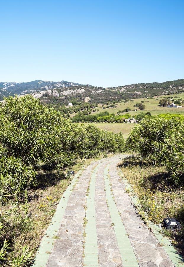 Download Rural road stock image. Image of andalucia, bush, seasonal - 25416491