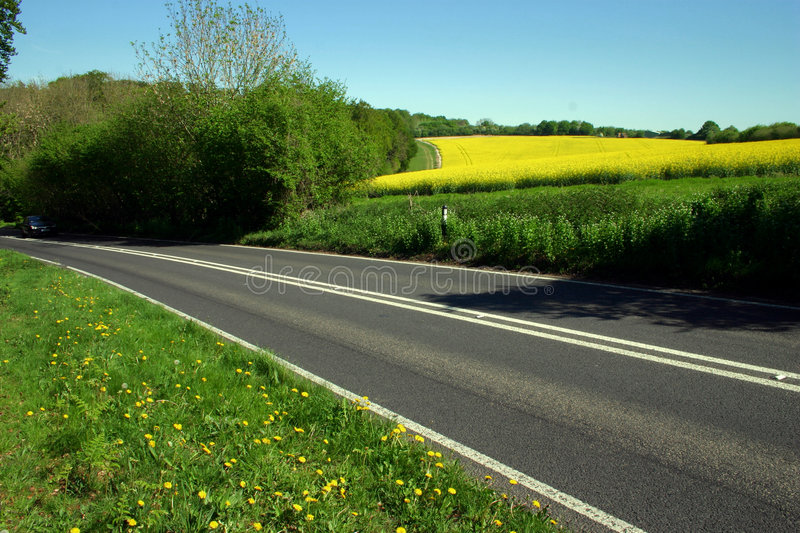 Rural Road. Passing between bright yellow fields of oilseed crop stock images