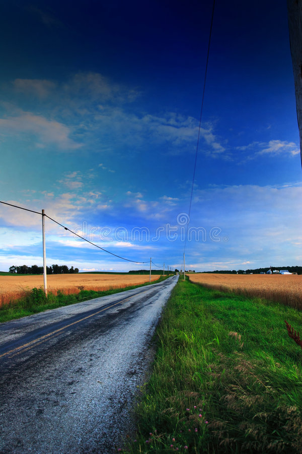 Rural Road. A rural country road with fields of wheat royalty free stock image