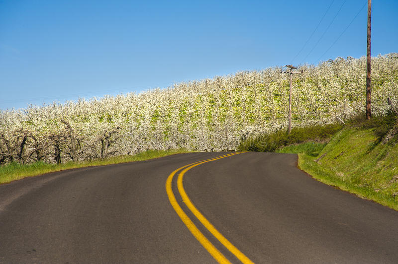 Download Rural road, apple orchards stock image. Image of nature - 24641249