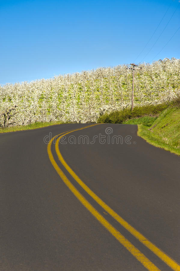 Download Rural road, apple orchards stock image. Image of infrastructure - 24641253