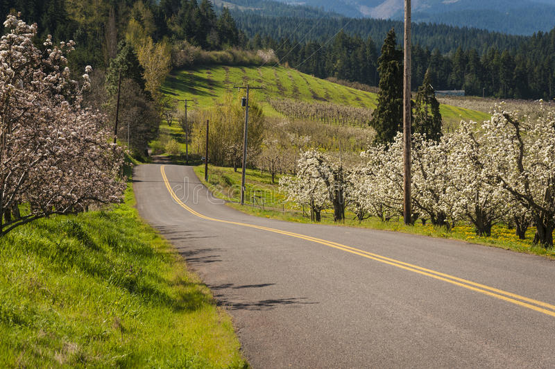Rural Road Through Blooming Apple Orchards Stock Photo
