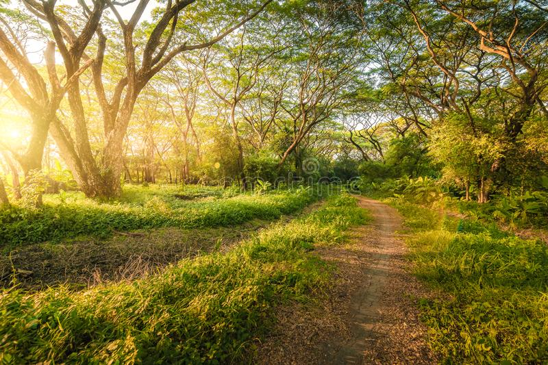 Rural road through the deep green forest. natural background. Concept stock image