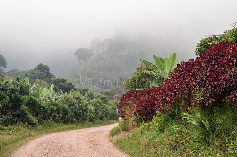 Rural road through the foggy landscapes towards the cloud forests surrounding the small village of coffee growers in Honduras. Rural road through the foggy royalty free stock photo