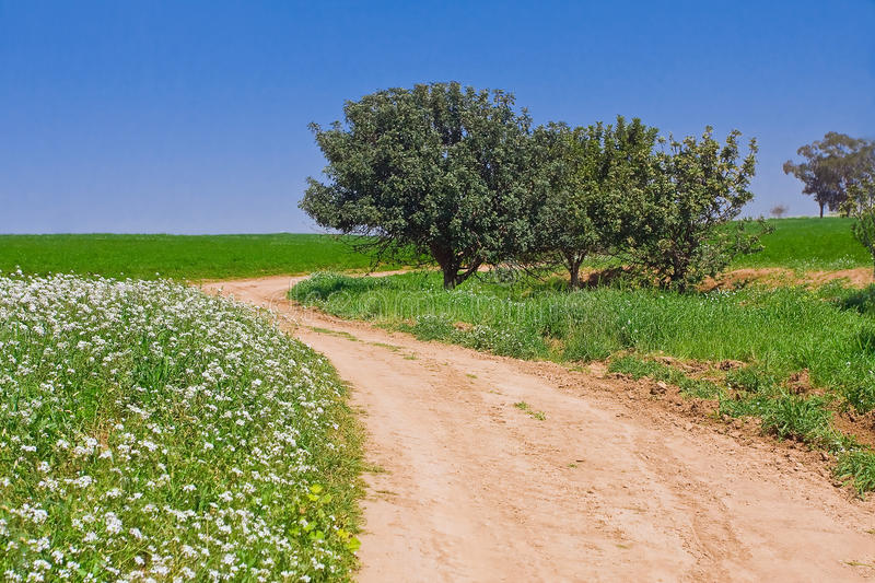 Rural road in green landscape. Rural country road among green meadow landscape with blue sky royalty free stock images