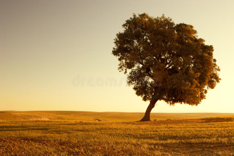 Download Rural scene stock image. Image of solitary, dawn, nature - 13947847