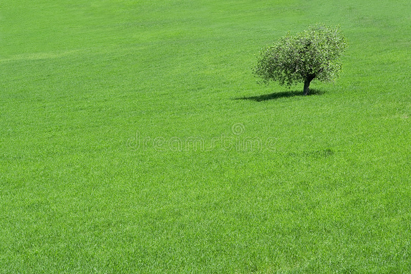 Rural scene. In mallorca spain stock photos