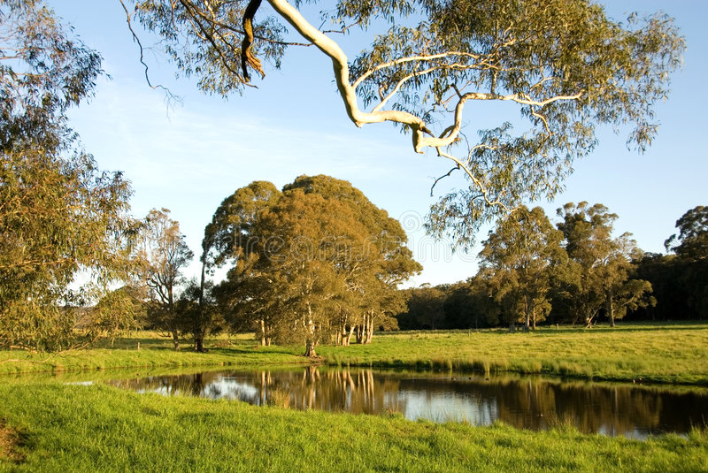 Rural Scene. A late afternoon rural scene, near Moss Vale, New South Wales, Australia royalty free stock images