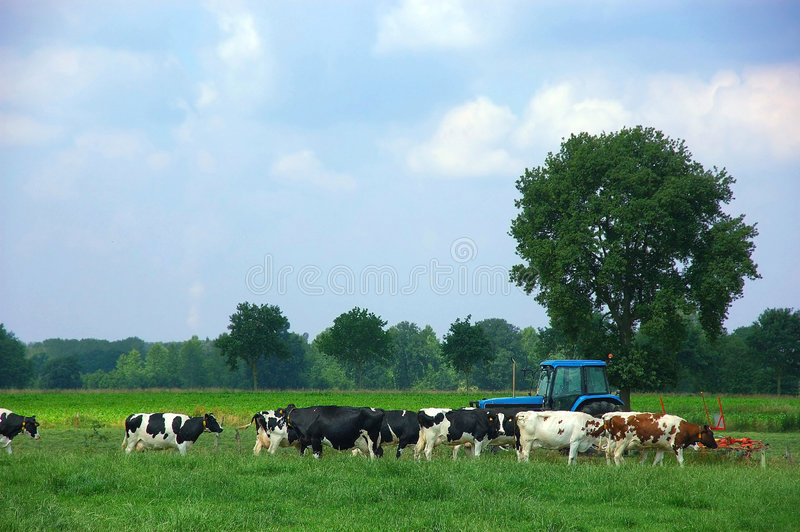 Rural scene royalty free stock photo