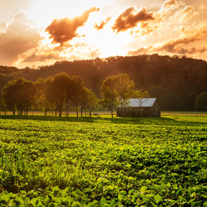 Download Rural scene stock image. Image of beautiful, field, nature - 40879929