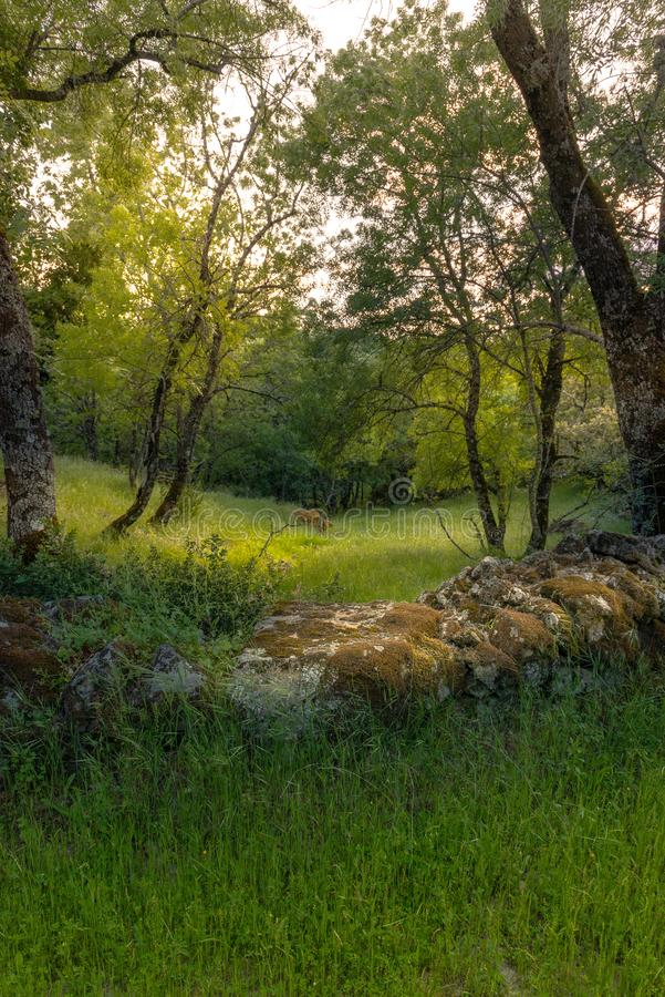 Rural scene. Beautiful rural landscape in late spring royalty free stock photos