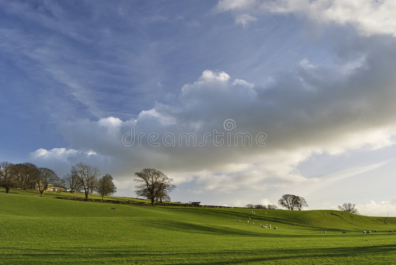 Rural scene with grazing sheep stock photos