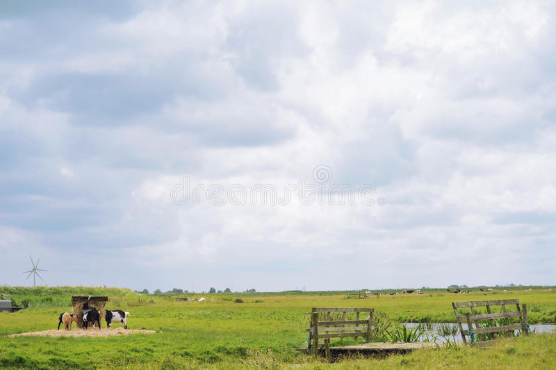 Download Rural Scene With Some Goats In The Front Stock Image - Image: 26173649