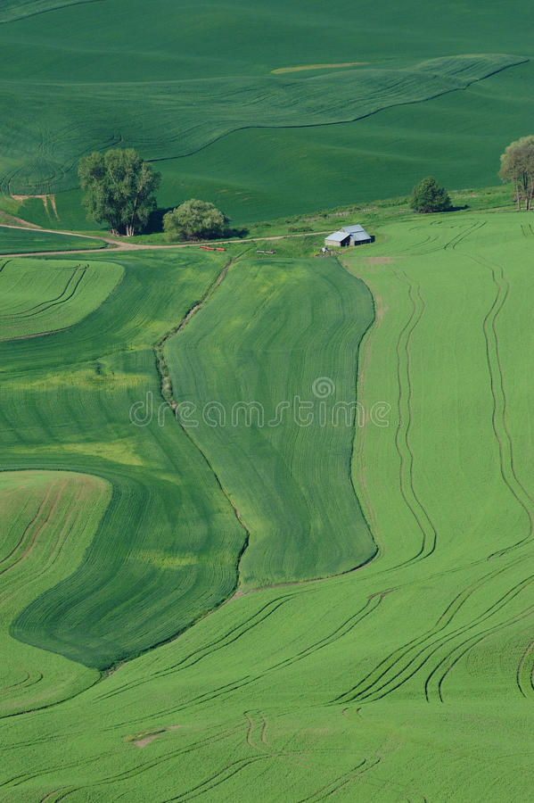 Rural scene of wheat field royalty free stock image