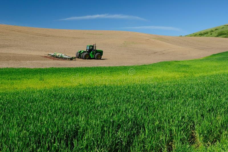 Rural scene of wheat field stock photo