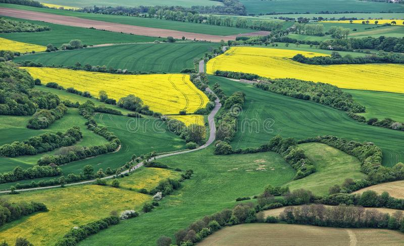 Rural scenery with road between yellow Swedish turnip fields royalty free stock image