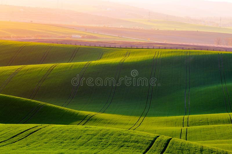 Rural spring agriculture texture background. Green waves hills in South Moravia, Czech Republic during sunset. Green fields royalty free stock photo