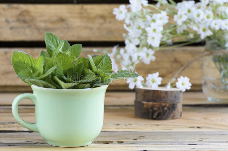 Rural still life with a green cup of melissa officinalis. On a wooden table stock image