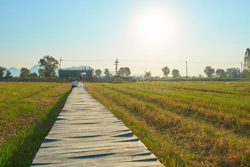 Rural summer landscape,Beautiful sunset over the green agricultural field and Blue Sky, Wood bridge over the field. Copy space for text stock photo