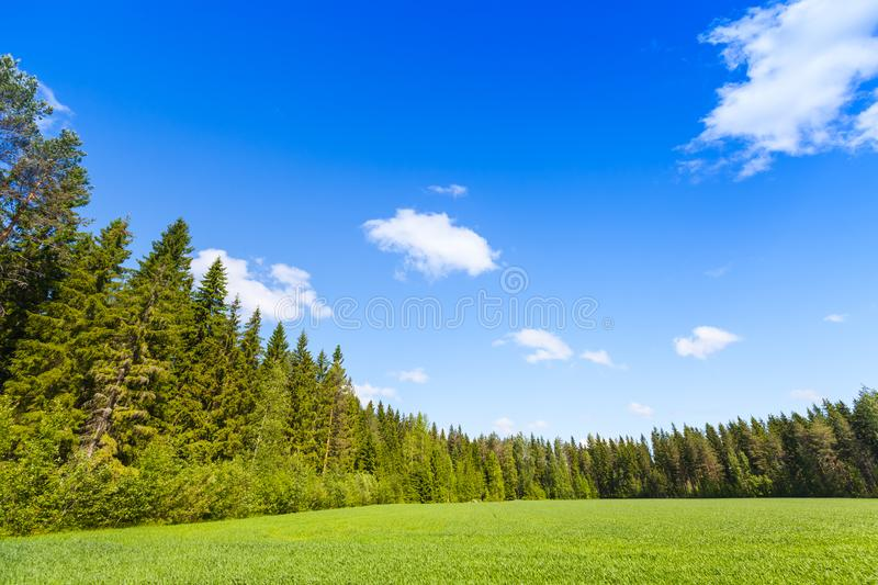Rural summer landscape, empty green field. And forest under blue sky. Europe, Finland stock photos