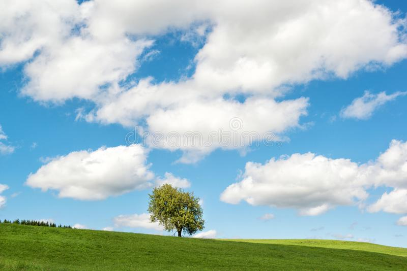 Rural summer landscape, lonely tree on a green field with beautiful cloudy sky, Germany stock photo