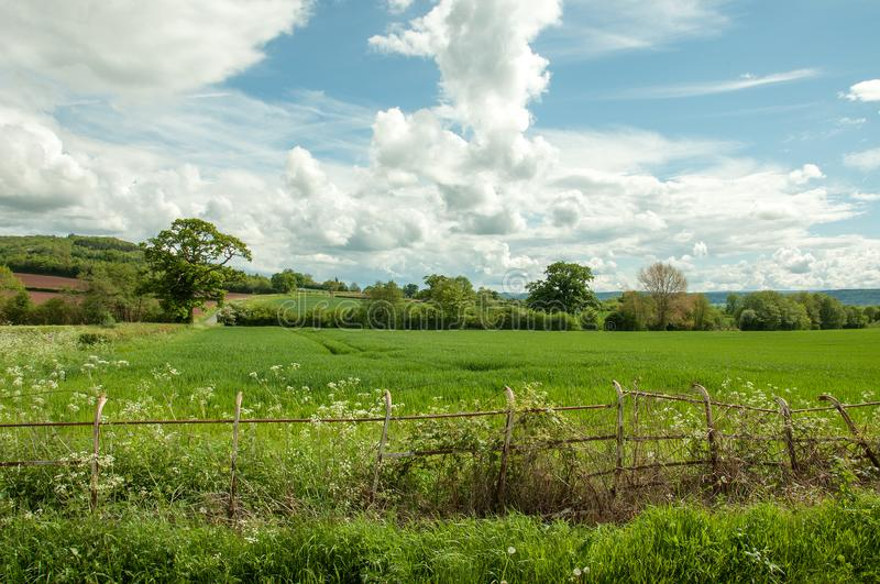 Summertime hedgerow and old fence in the English countryside. A rural summertime landscape scene with clouds and blue skies and an old iron fence stock images